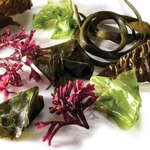 Algues-Japonesos-Superaliments